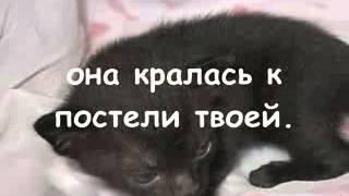 очень грустное видео про кошек