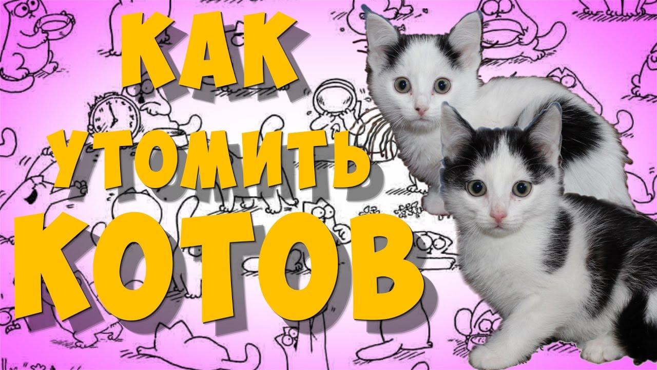 Как утомить котов - YouTube
