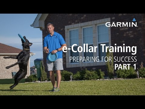 Dog Training With E Collar