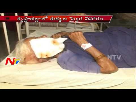 Street Dogs attack on People in Krishna District, 17 Injured