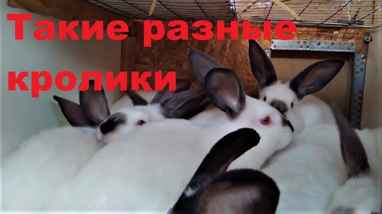Запой кроликов лечение алкоголизма домашний доктор москва