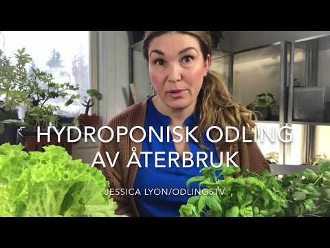 Hydroponisk odlingslåda av återbruk tillverka en egen så här