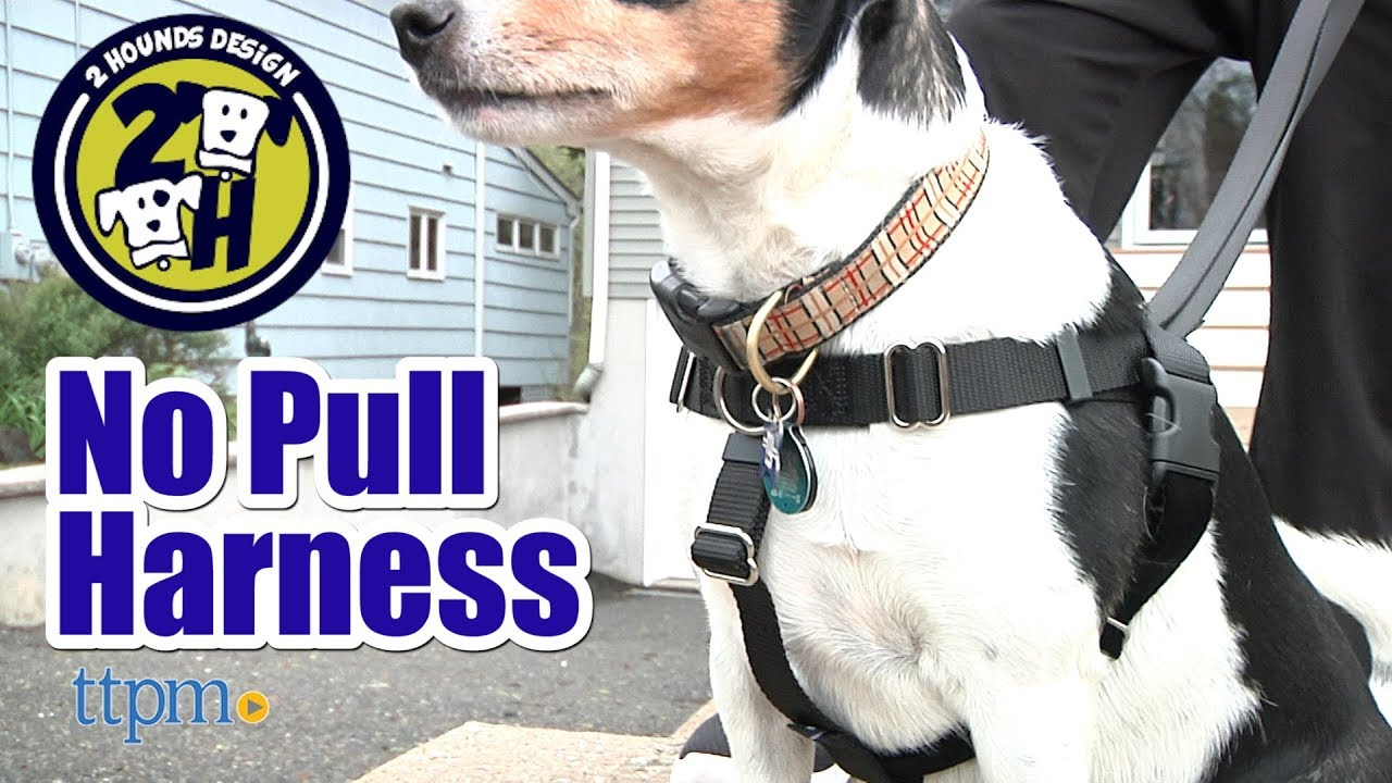 Freedom No Pull Harness from 2 Hounds Design - YouTube