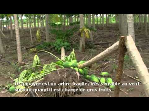Ecotourisme au Bénin : le Centre Songhai de Parakou (Borgou)