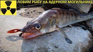 Московский Чернобыль Рыбалка в марте 2020 Каролинская оснастка