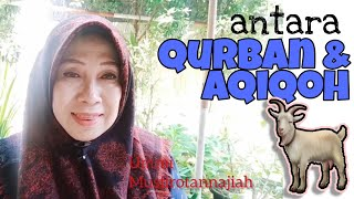 Antara Qurban Dan Aqiqoh