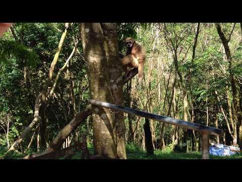 Зоопарк Paradise Park Farm (Таиланд, о. Самуи) для сайта Отзовик