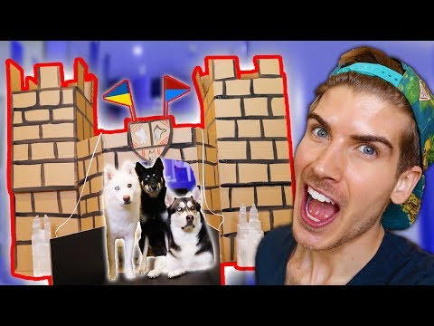 I Built A Cardboard Castle For My Dogs!