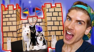 Download I Built A Cardboard Castle For My Dogs! Mp3 and Videos