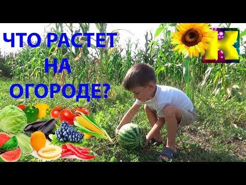 Как растут овощи
