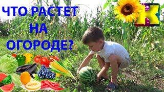 ЧТО растет на ОГОРОДЕ? Учим овощи!  У дедушки и бабушки  Обучающее видео для детей