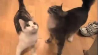 Kittens mew on different voices! Котята мяукают на разные голоса!