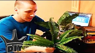 How To: Diy Aquarium Plants