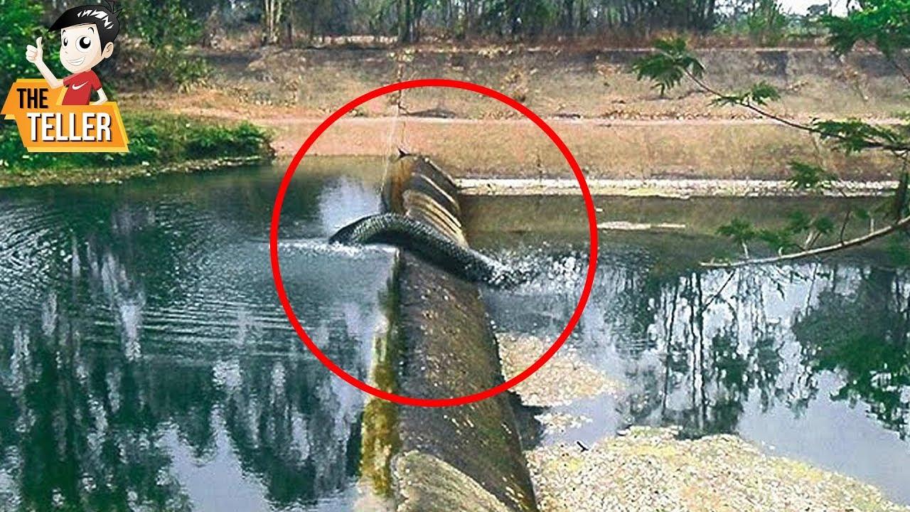 8 พญานาคตัวจริง ที่ถูกถ่ายไว้ได้ ( ไม่เชื่ออย่าลบหลู่ !! )  Real serpent