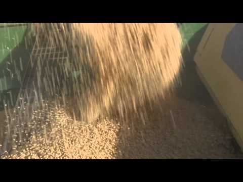 Growing Soybeans for Biodiesel