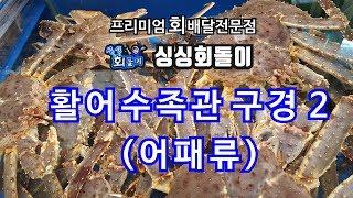 싱싱회돌이-회배달 전문점-어패류 수족관 구경하기