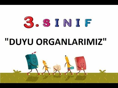 3 Sınıf Duyu Organlarımız Youtube
