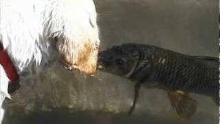 Dog & Fish Kiss & Swim Together (original)