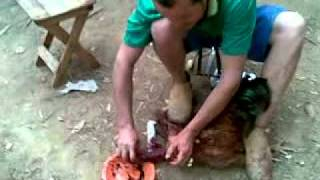 du matando o frango