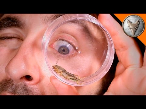 Thumbnail: Mole Cricket Experiment!