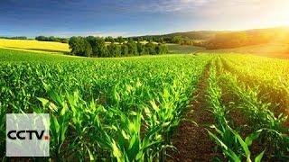L'agriculture est la clé du développement africain