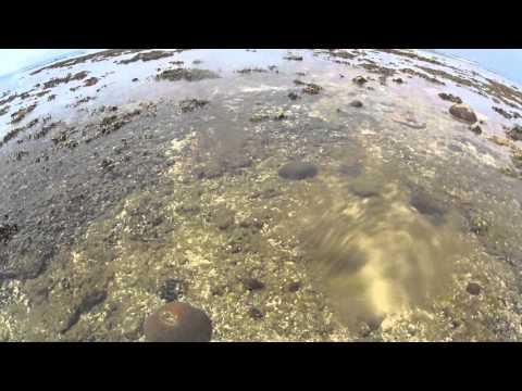 石垣島 米原 干潮時にリーフエッジまで行ってみた