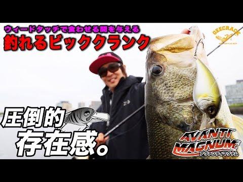 バス釣り釣れるビッククランクアヴァンティマグナムDR琵琶湖:ヤマピーガイド