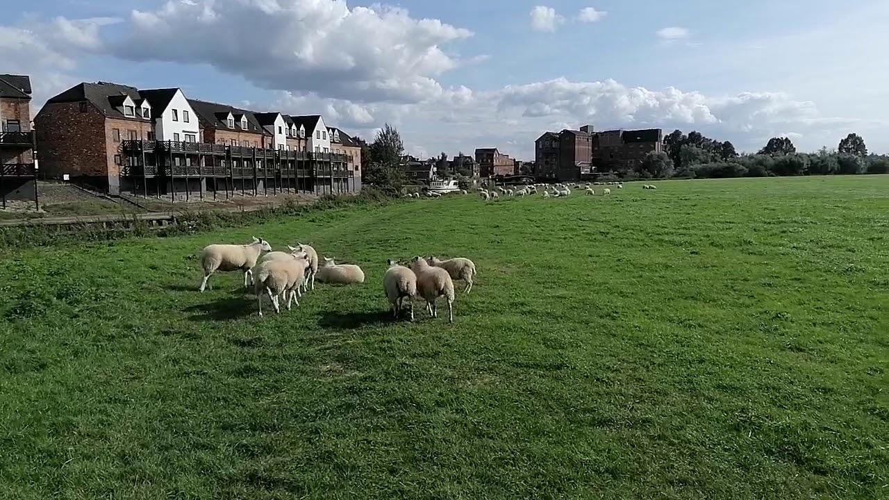 Download Tewkesbury - Severn ham