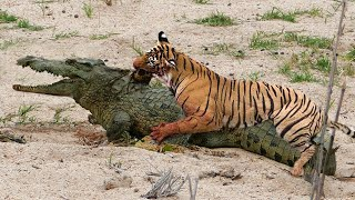 10 Animals That Messed With The Wrong Opponent