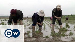 انفتاح كوريا الشمالية الاقتصادي | الأخبار