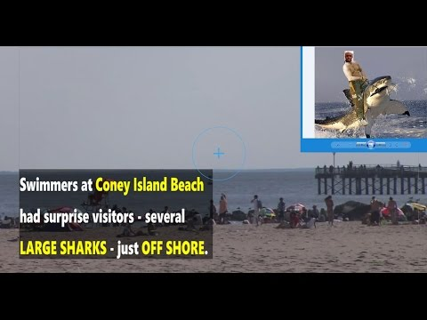 SEVERAL Large Sharks Drive Swimmers off Coney Island Beach!!!