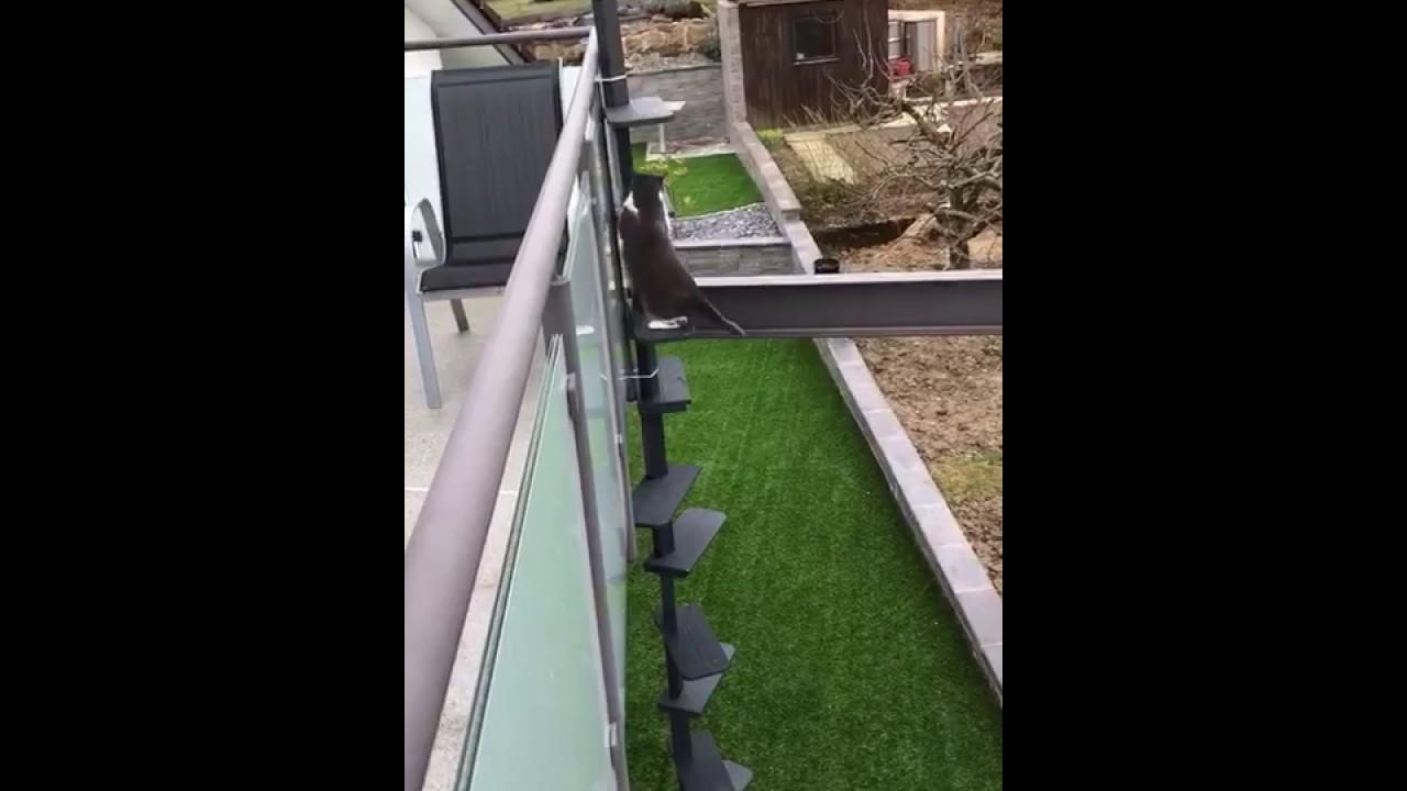 Miaudo Die Katzentreppe Fur Den Balkon Und Hauswand Youtube