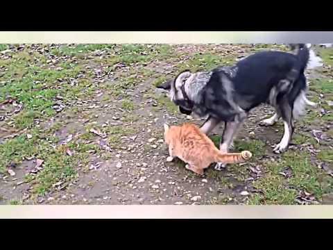 Живут как кошка с собакой: необычные факты совместного проживания