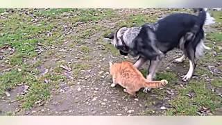 Как кошки и собаки живут вместе и дружат между собой.