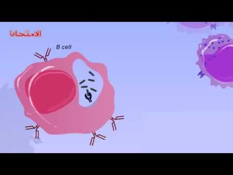 """الأحياء - 3ث - المناعة : المناعة الخلطية """"المناعة بالأجسام المضادة"""""""