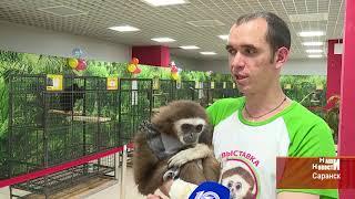 Впервые  в Саранск приехала контактная выставка обезьян в ТК Макс