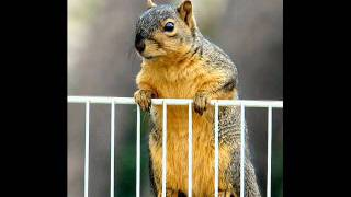 Shirley and Squirrely  -  Hey Shirley  This Is Squirrely