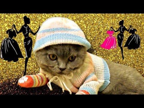 Кошачий модный показ - Кот в одежде!