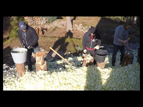 Chopping 12 000 onions: Time-lapse