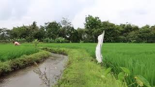 Relaxing Nature Scenes Video