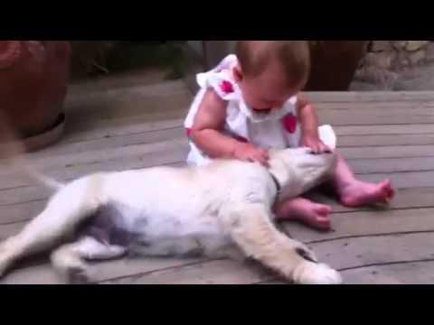 Golden Retriever puppy loving baby