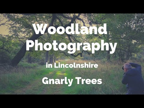 Gnarly Trees in Lincolnshire : Woodland Photography