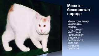 Самые редкие породы кошек! Смотри быстрее