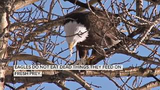 PRINCIPLES TO LEARN FROM THE EAGLE IN VIDEO