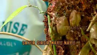 Sayur Sirsir Namu-Namu | JEJAK ANAK NEGERI