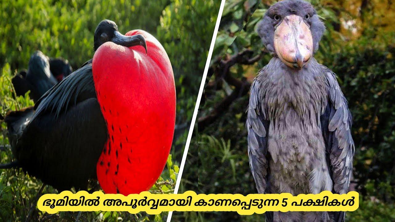 അപൂർവ്വയിനം 5 പക്ഷികൾ | Five Amazing Unique Birds | Hidden Facts