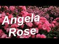 Angela (Korday, Angelica) Rose
