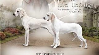 Porcelaine Dog Breeds, Chien de FrancheComté  From @tinatrading