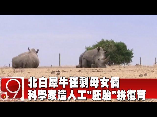 北白犀牛僅剩母女倆 科學家造人工「胚胎」拚復育《9點換日線》2020.01.21