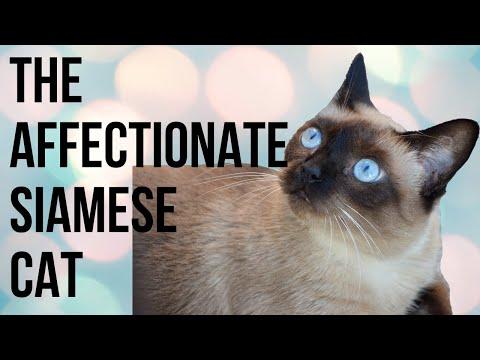 affectionate Margot the cat